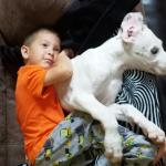 great dane puppy laying on a chair with kid