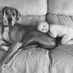 Baby laying on Great Dane