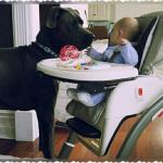 black great dane with a baby