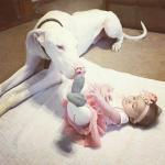 great dane laying on a blanket with a baby