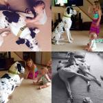 great dane harlequin playing with kids